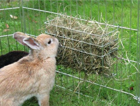 Кормушки для кроликов своими руками под сено